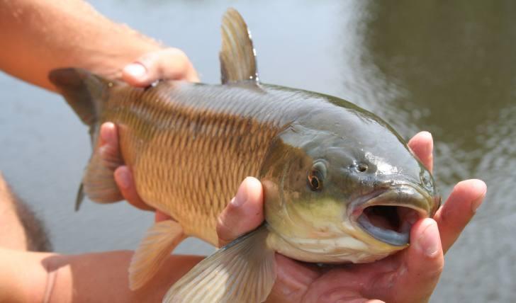 Fischen und Angeln in der Schweiz